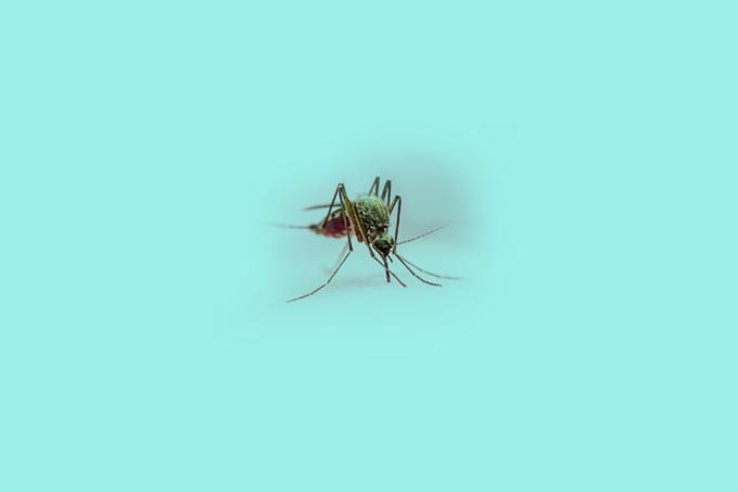 gêmeos do Zika