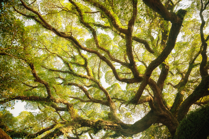 A grande família- cientistas criam árvore genealógica com 13 milhões de pessoas e 11 gerações