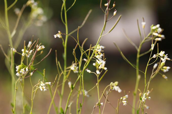 Como as plantas se protegem dos raios ultravioletas