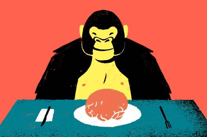 Chimpanzés preferem comer cérebros