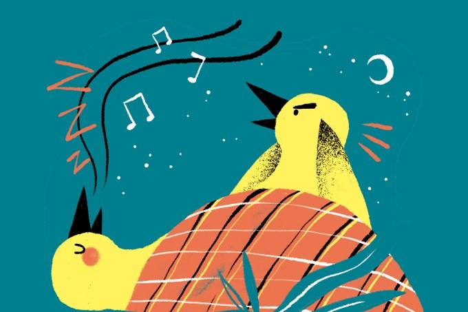 Pássaros cantam durante os sonhos