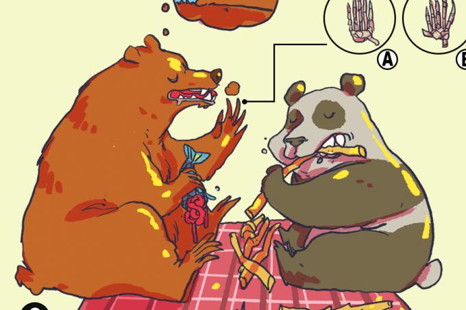 ORCL | Quais as diferenças entre o panda e outros ursos?_HOME