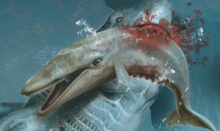 tubarao-peixe-mar-sangue-morte