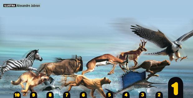 per-125-animais-mais-velozes bichos velocidade águia cheetah zebra