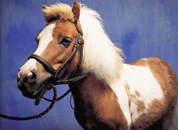 4fe10a51865be25b6500020bponei-cavalo-bicho-animal.jpg