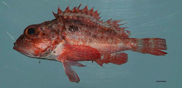Fish4439_-_Flickr_-_NOAA_Photo_Library