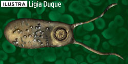 pior-parasita-naegleria-fowleri