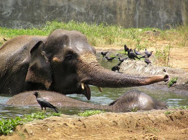 Elephants_byculla