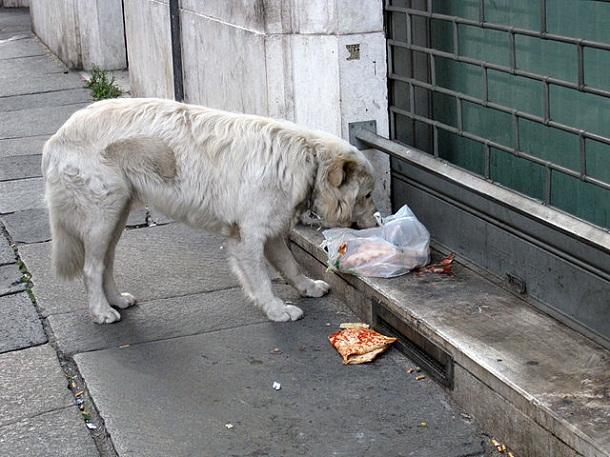 Stray_dog_in_Rome