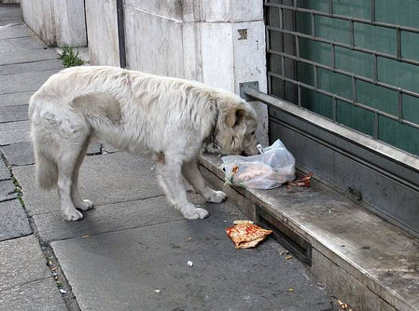523a0d1a865be23faf000512stray_dog_in_rome.jpeg