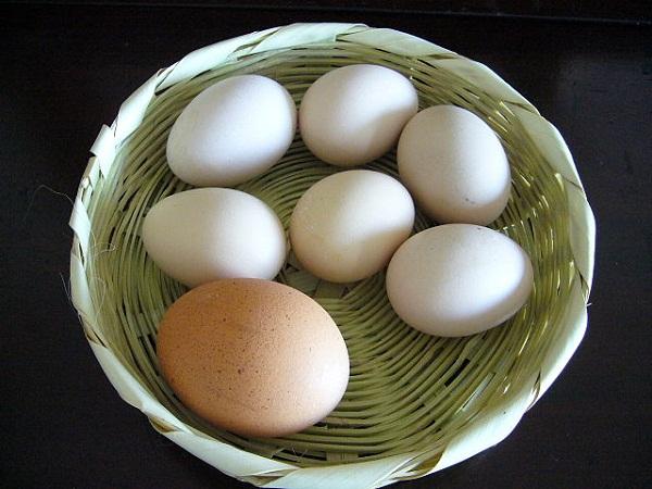 640px-100331_huevos_gallina_de_patio