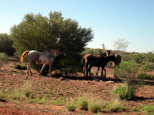 529e1b44865be257550005fawild_horses.jpeg