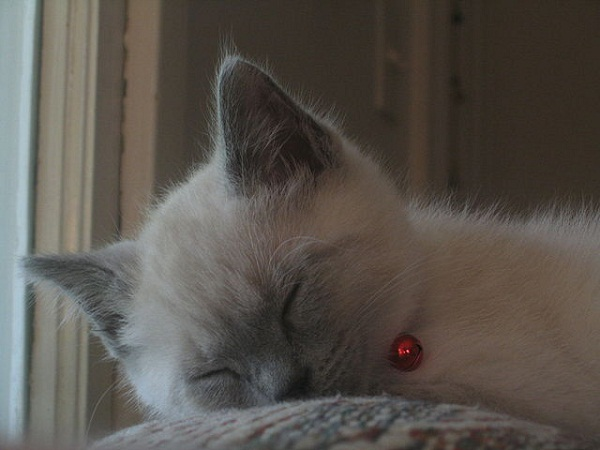 52a234df865be2135d000572640px-sleeping_cat_2006.jpeg