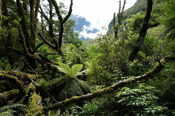 640px-NZ_Southern_Island_forest