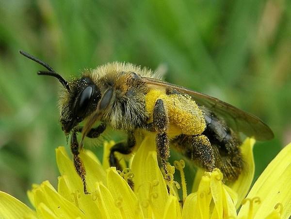 52dd6fa0865be27fb5000524600px-bain_de_pollen_bath_of_pollen_-2503875867.jpeg