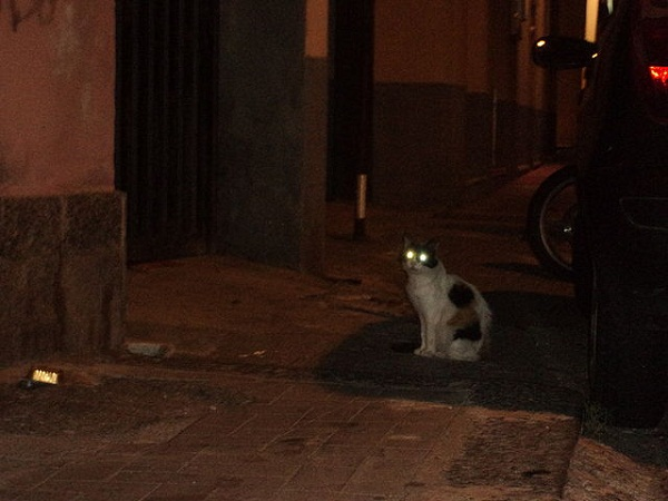 640px-Cat_in_the_night_of_Catanzaro_Lido