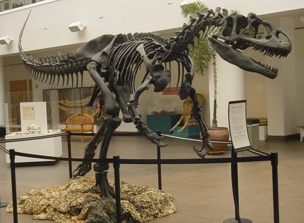 Allosaurus_SDNHM