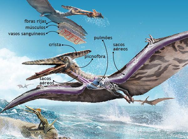 pterodactilo