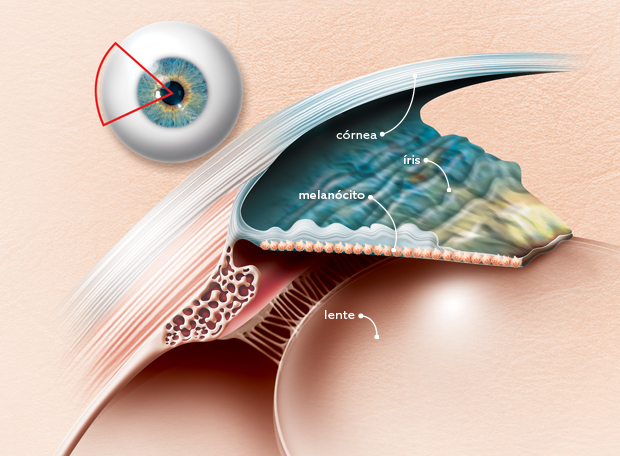 olho estrutura