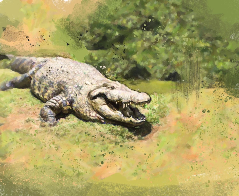 Henry - crocodilo 8373771w icaro