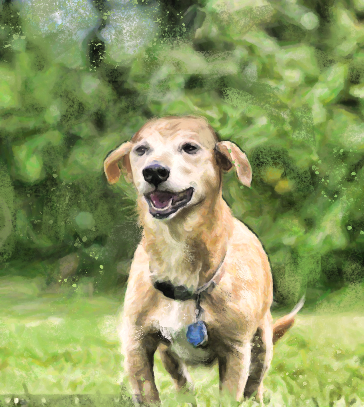 Cachorro - Max - foto por Barry Bland_Barcroft Media 02 icaro