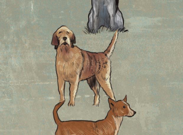 cachorro-extinção-4