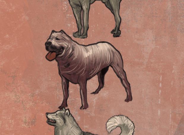 cachorro-extinção-2