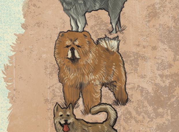 cachorro-extinção-3