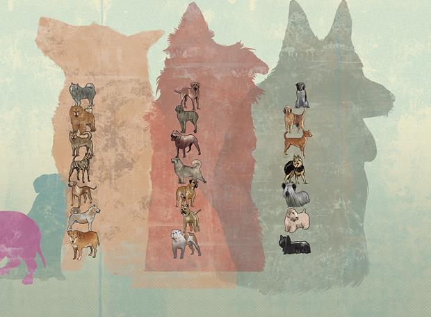 cachorro-extinção-1