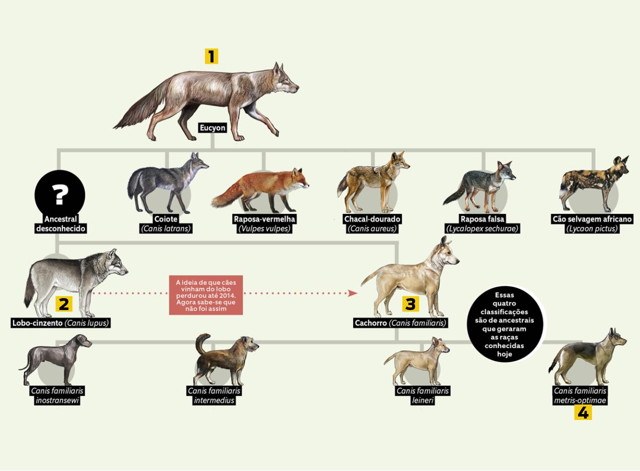 cães 9 - evolução 1