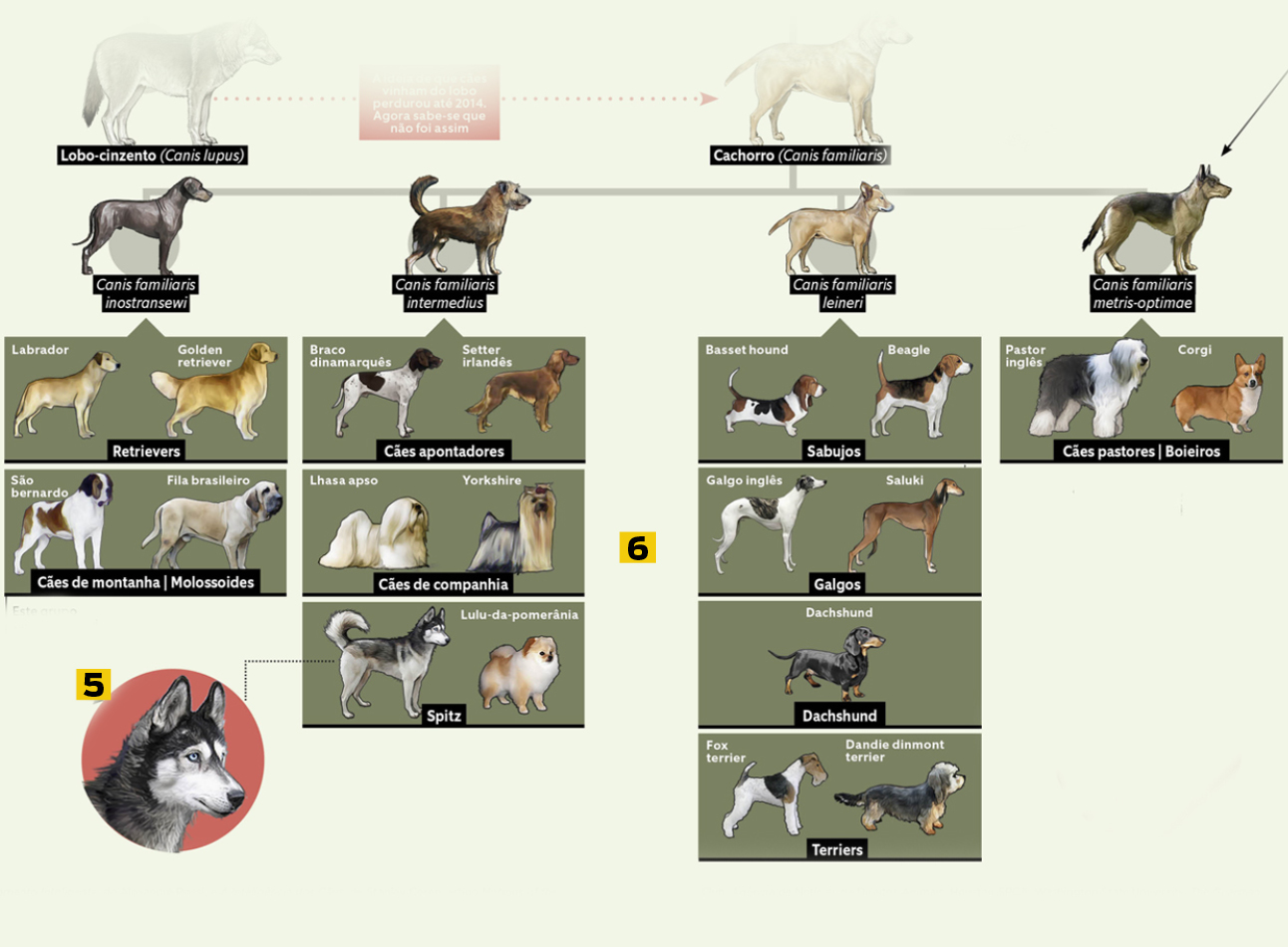 cães 10 - evolução 2
