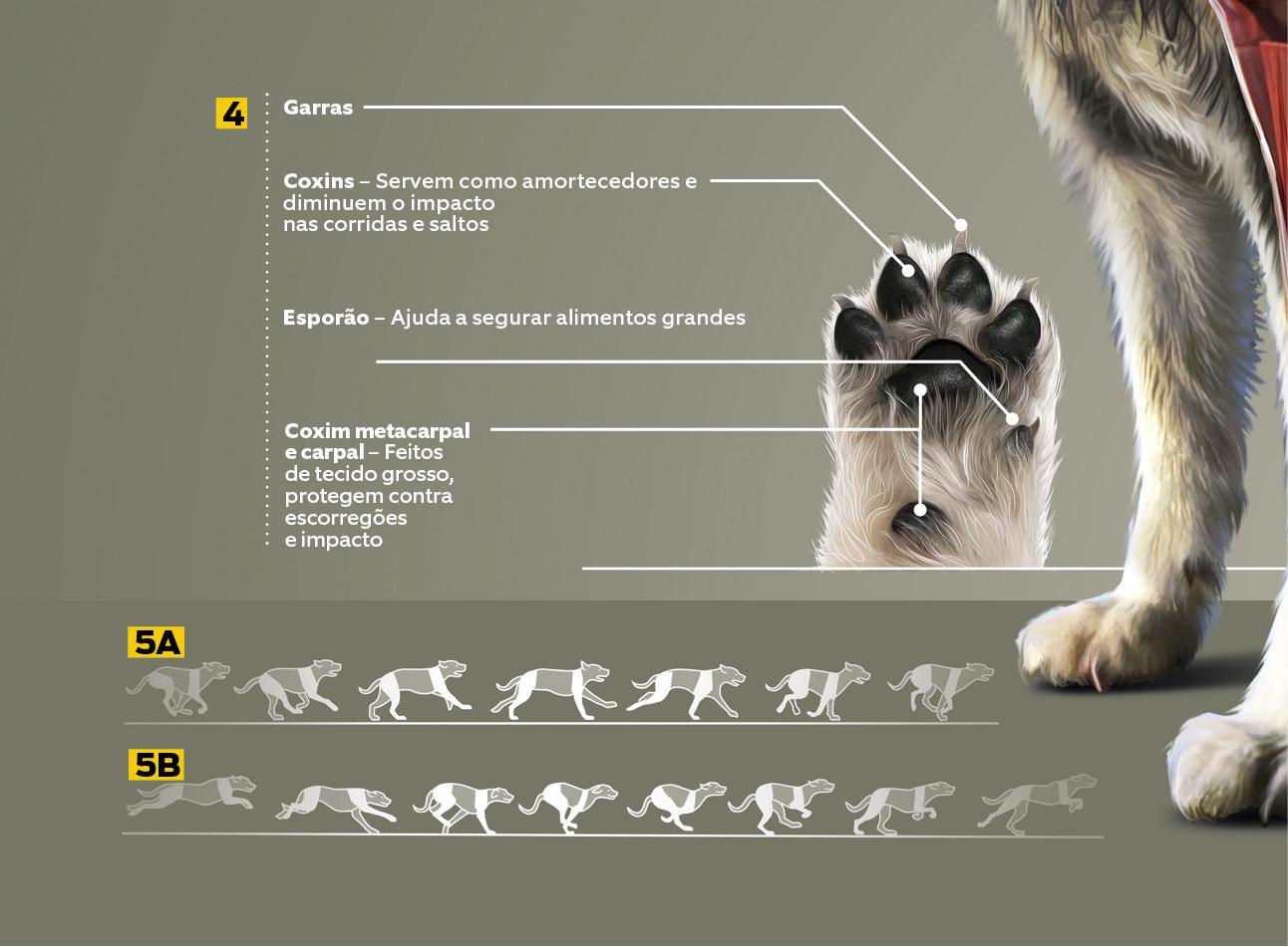 o corpo do cão2