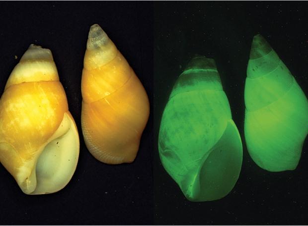 bioluminescencia3