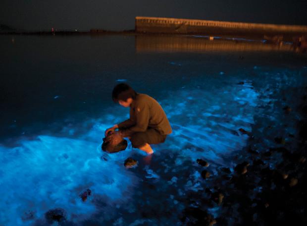 bioluminescencia14