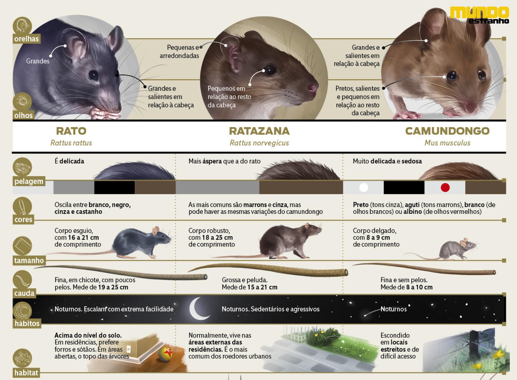 diferença entre os animais3