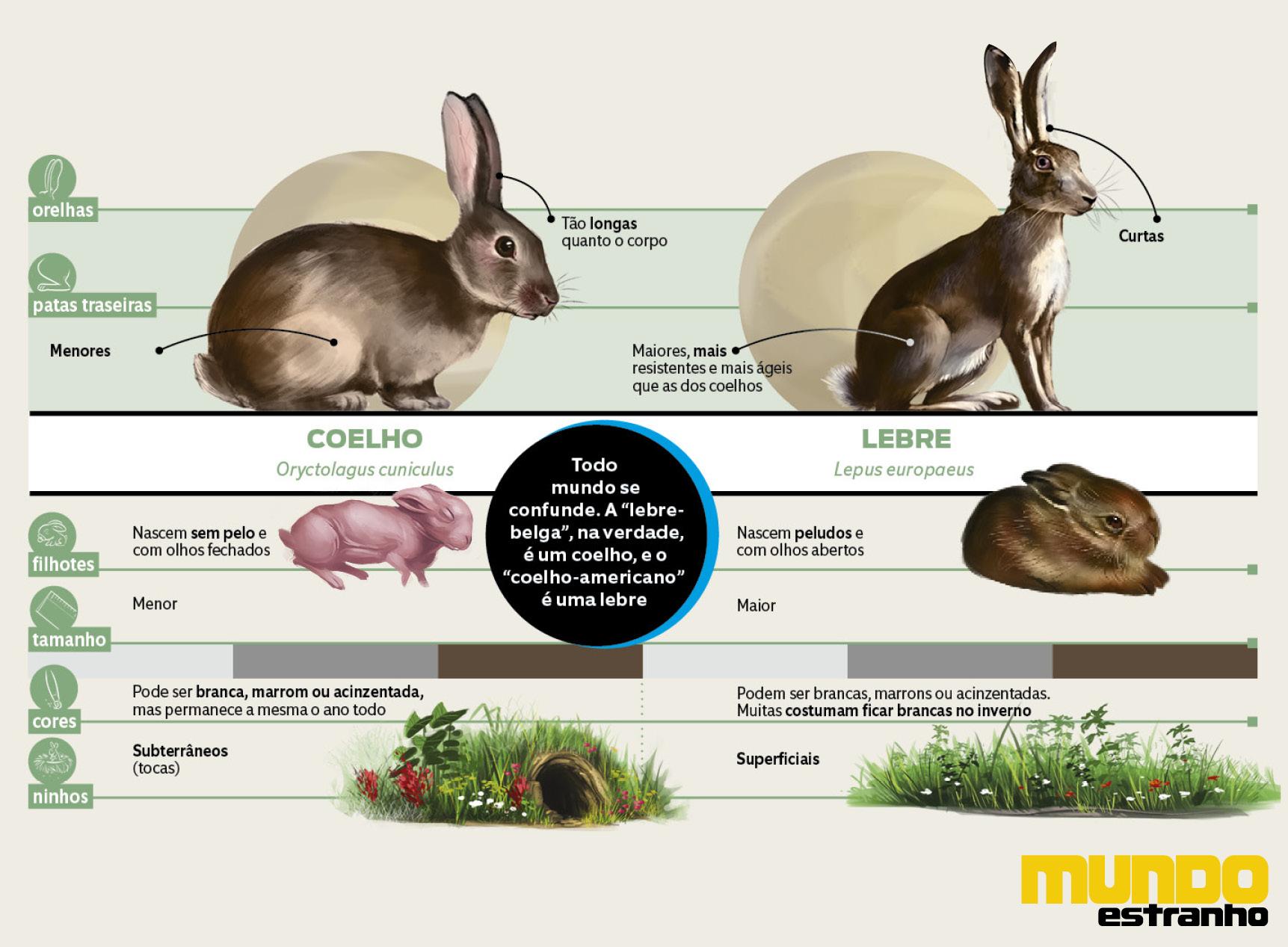 diferença entre os animais6