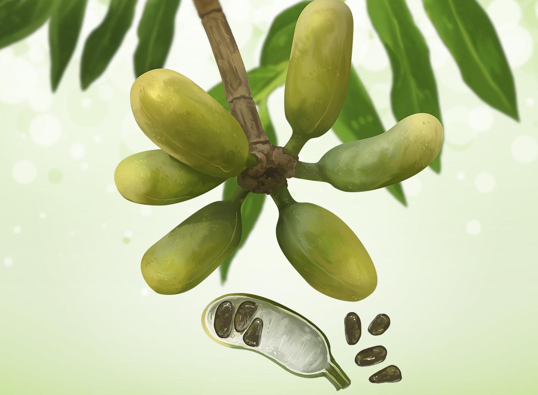 banana de macaco