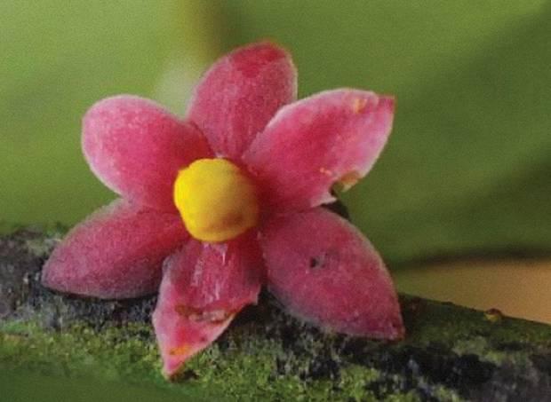 57b341260e21637197029cbcstaminate-flower.jpeg