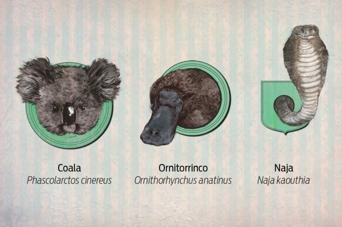 Como um animal é declarado extinto?m