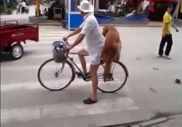 cachorro-bike