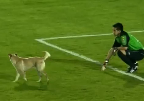 cachorro-campo