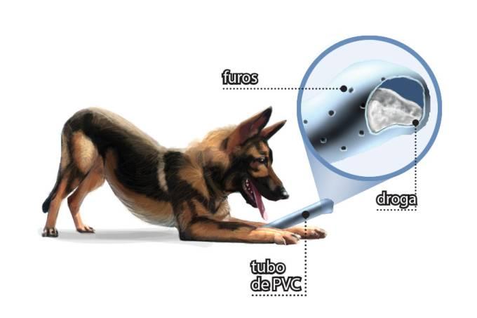 Cães Farejadores de Drogas