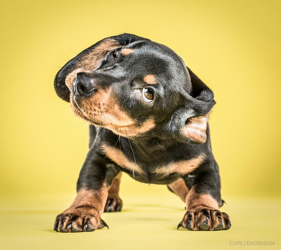 cachorros_6