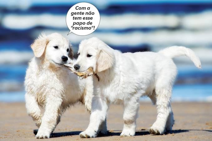 Cães reconhecem a própria raça?