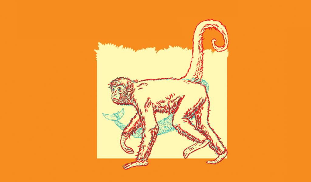 caudas-animais3