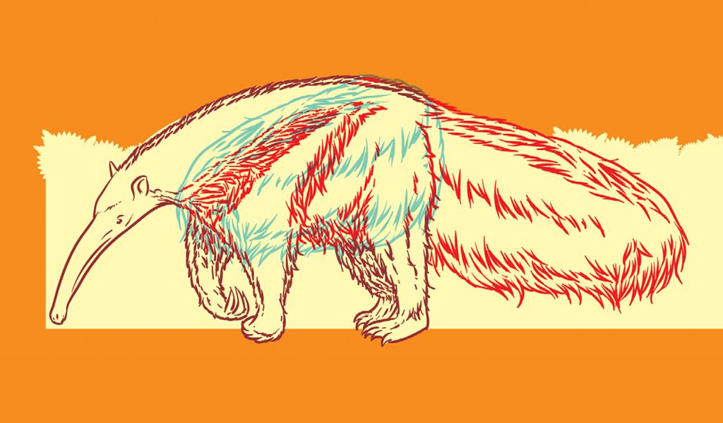 caudas-animais6