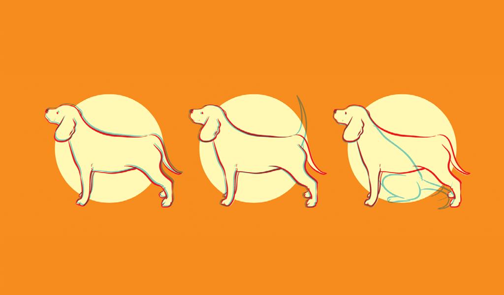 caudas-animais8