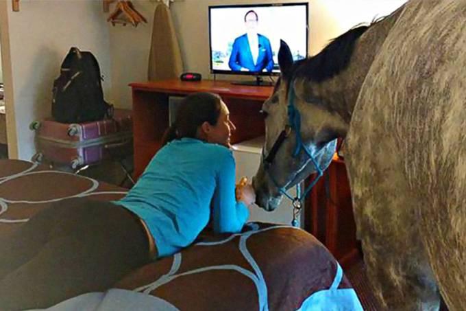Mulher testa limites de hotel e leva cavalo para seu quarto