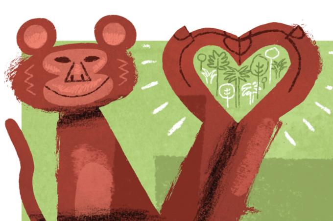 Células-tronco regeneram coração de macacos