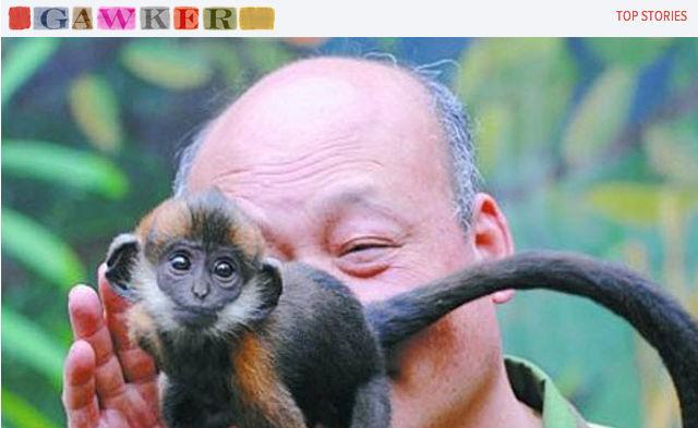 chines-macaco